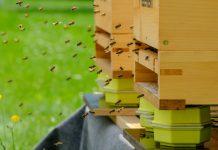 Die Telekom betreibt nun erstmals zwei smarte Bienenstöcke auch auf dem Gelände ihrer Bonner Zentrale.