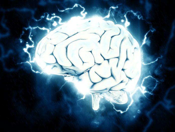 Schlaf macht den Hippocampus frei für neue Gedächtnisinhalte