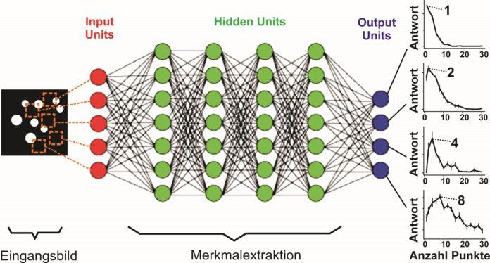 Künstliche neuronale Netze als Hirnmodell des Sehsystems