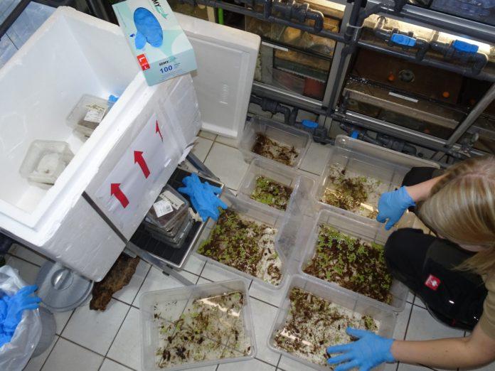 Beschlagnahmung von Reptilien und Amphibien aus Thailand