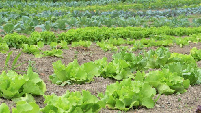 Positive Entwicklung: Nitratbelastung in sächsischen Talsperren rückläufig