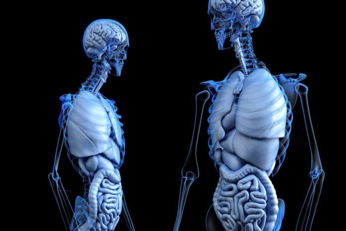 Molekülgruppe, die Gewebeverhärtungen steuert, entdeckt