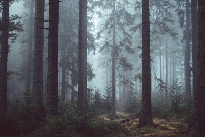 """Task-Force für Europas Wälder: Ministerkonferenz """"Forest Europe"""" tagt"""